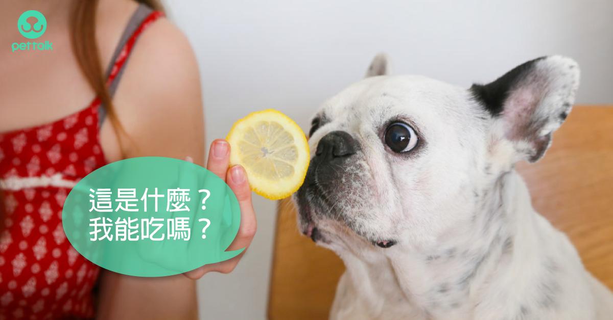 狗狗能吃?不能吃?水果的選擇與禁忌|專業獸醫—吳展祥
