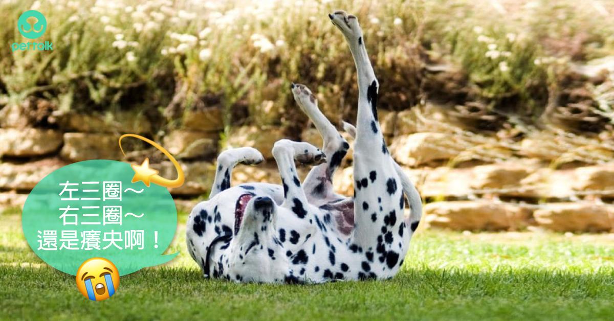 毛孩抓癢癢,要小心是這種討厭的蟲咬的!|PetTalk愛寵健康談
