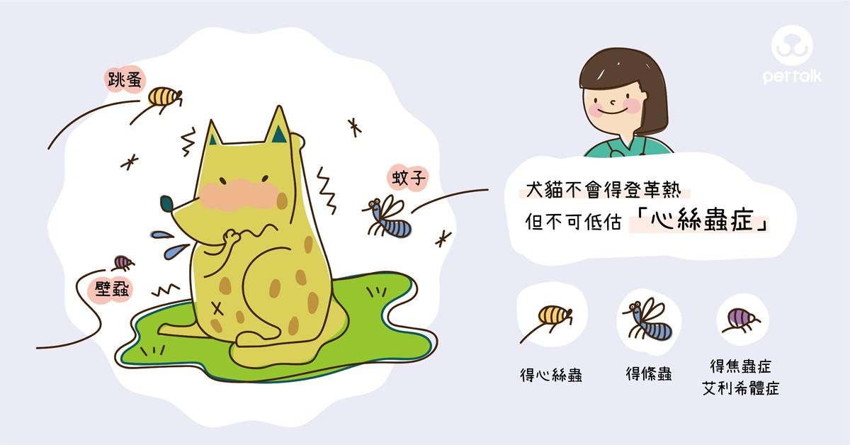 犬貓不會得登革熱,但不可低估「心絲蟲症」|專業獸醫師—陳郁晴醫師