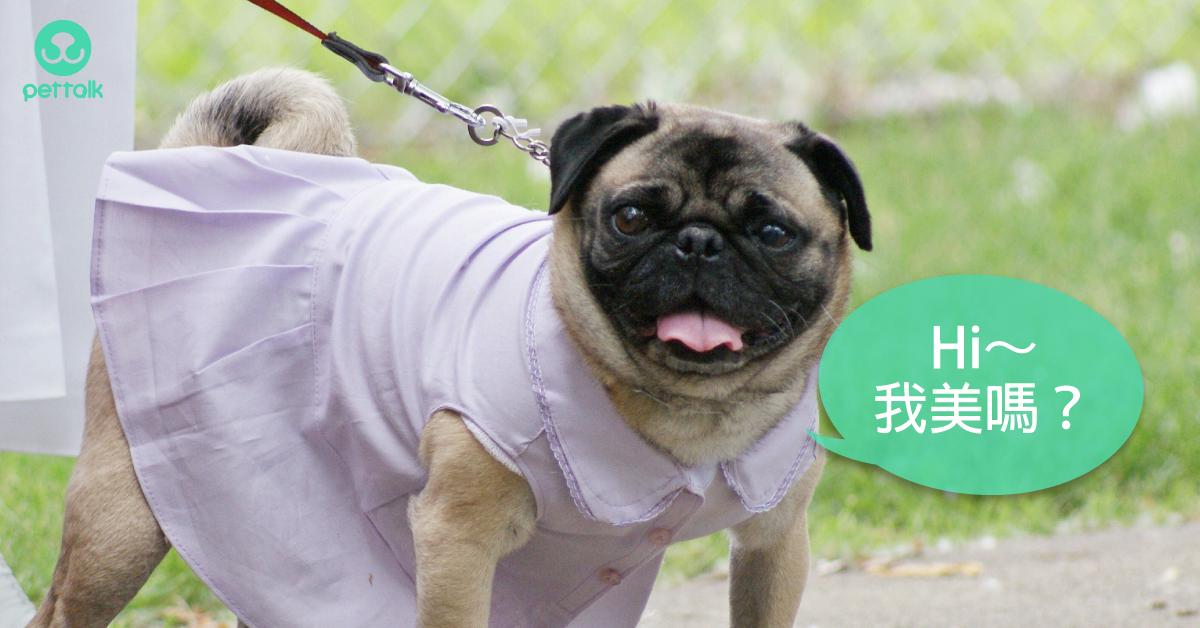 當母狗的「大姨媽」來拜訪,可以怎麼照顧?|專業獸醫—伍振宇
