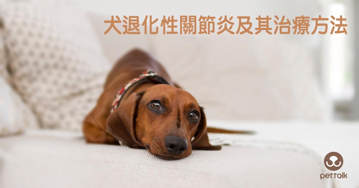 犬退化性關節炎及其治療|PetTalk愛寵健康談