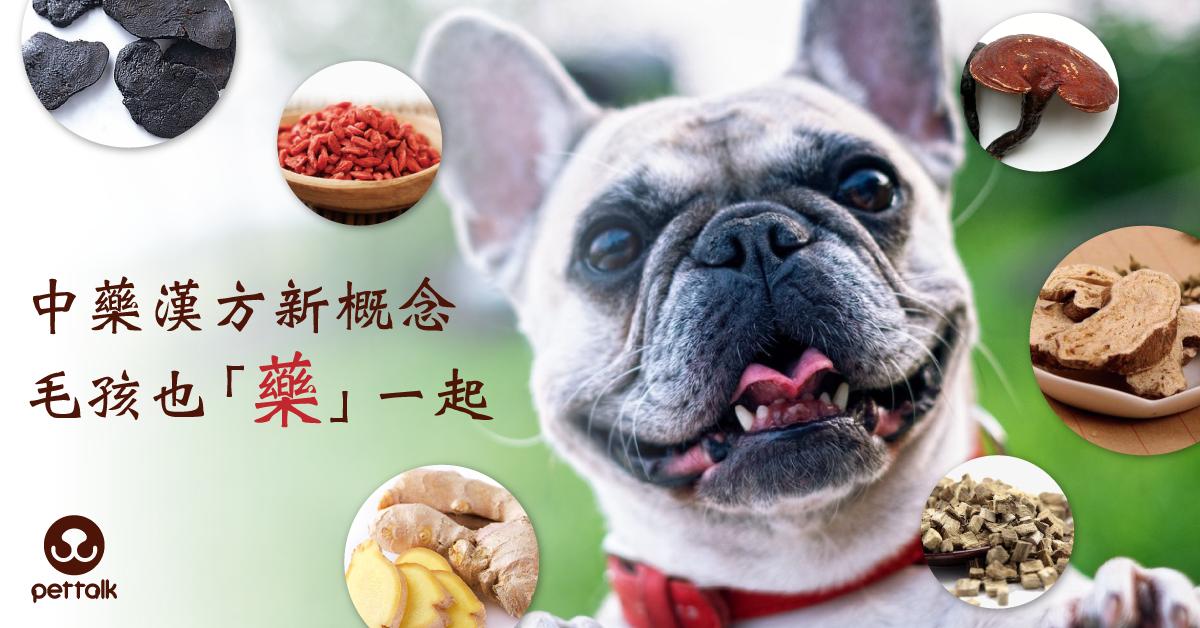 中藥漢方新概念,毛孩也「藥」一起|PetTalk愛寵健康談