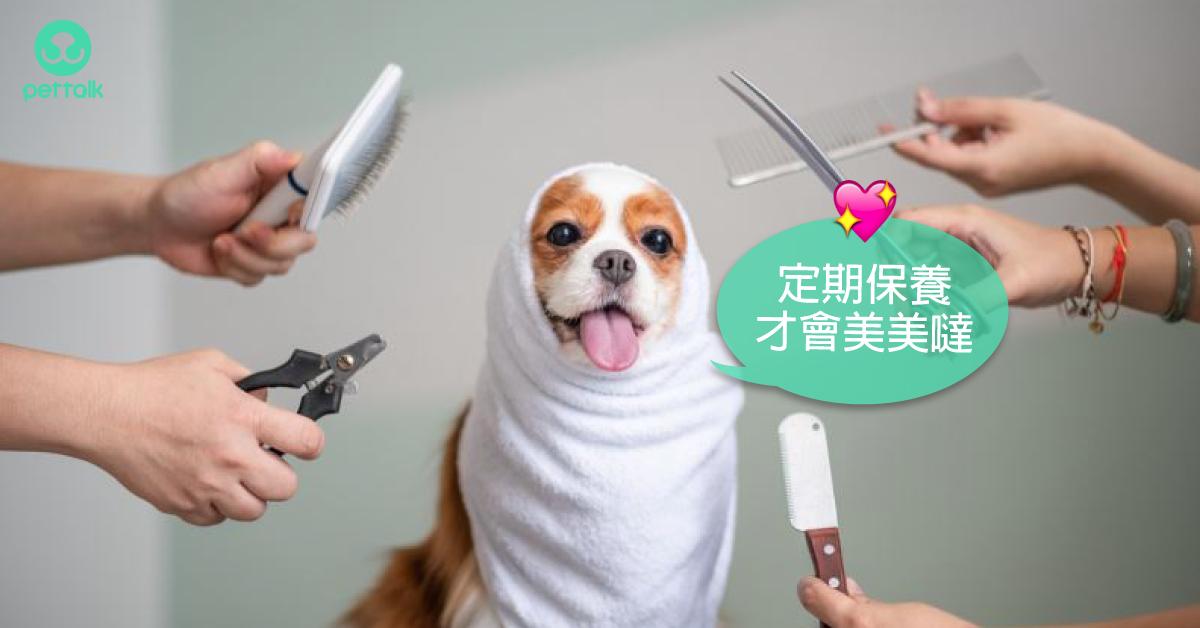 狗狗的基礎保養—那些需要剃毛的小地方|寵物美容老師—林文琳