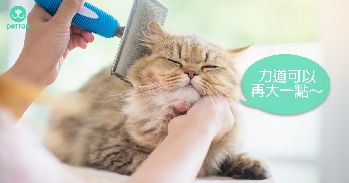 別認為貓咪愛乾淨就疏忽了日常護理|專業獸醫—王善群