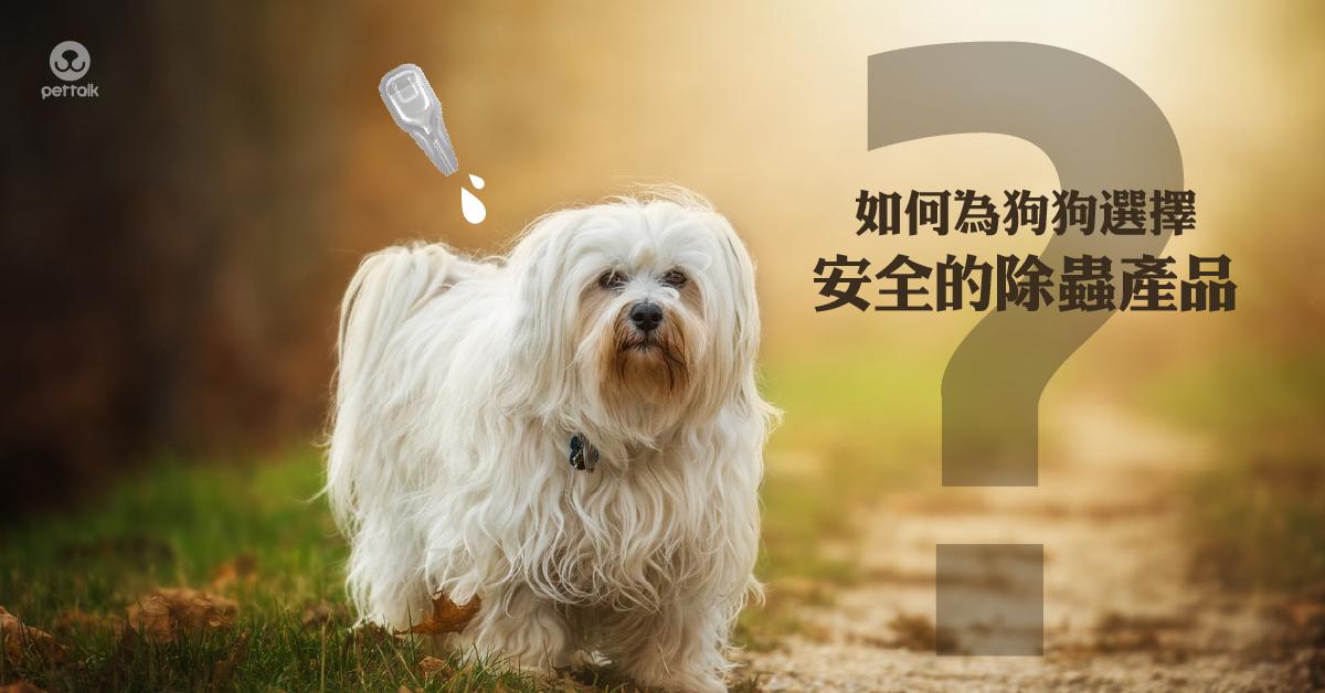 如何為狗狗選擇安全的除蟲產品|PetTalk愛寵健康談