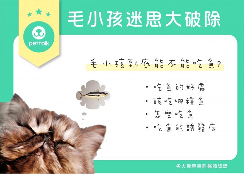 【PETTALK愛寵美容學堂-毛小孩迷思大破除】毛小孩到底該不該吃魚?