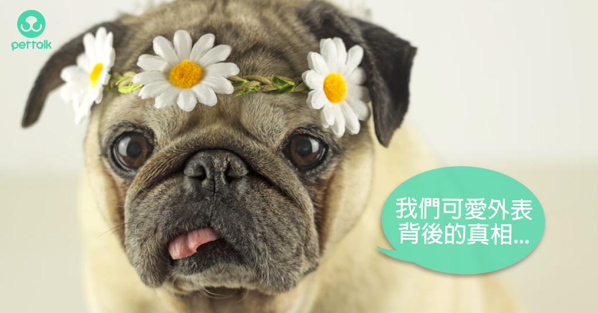 品種犬的遺傳密碼|PetTalk愛寵健康談