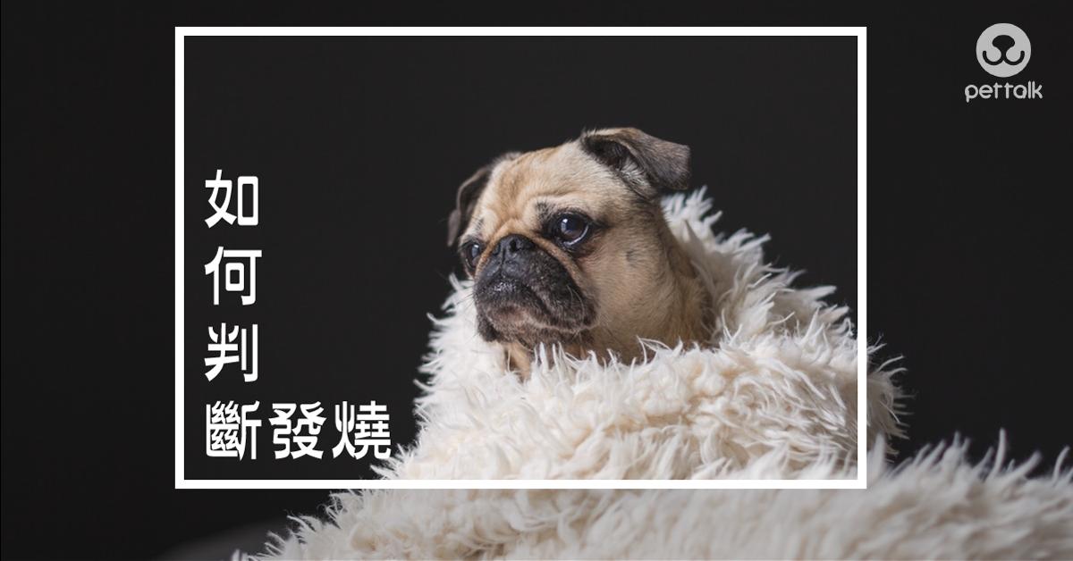 如何知道狗狗有沒有發燒|PetTalk愛寵健康談