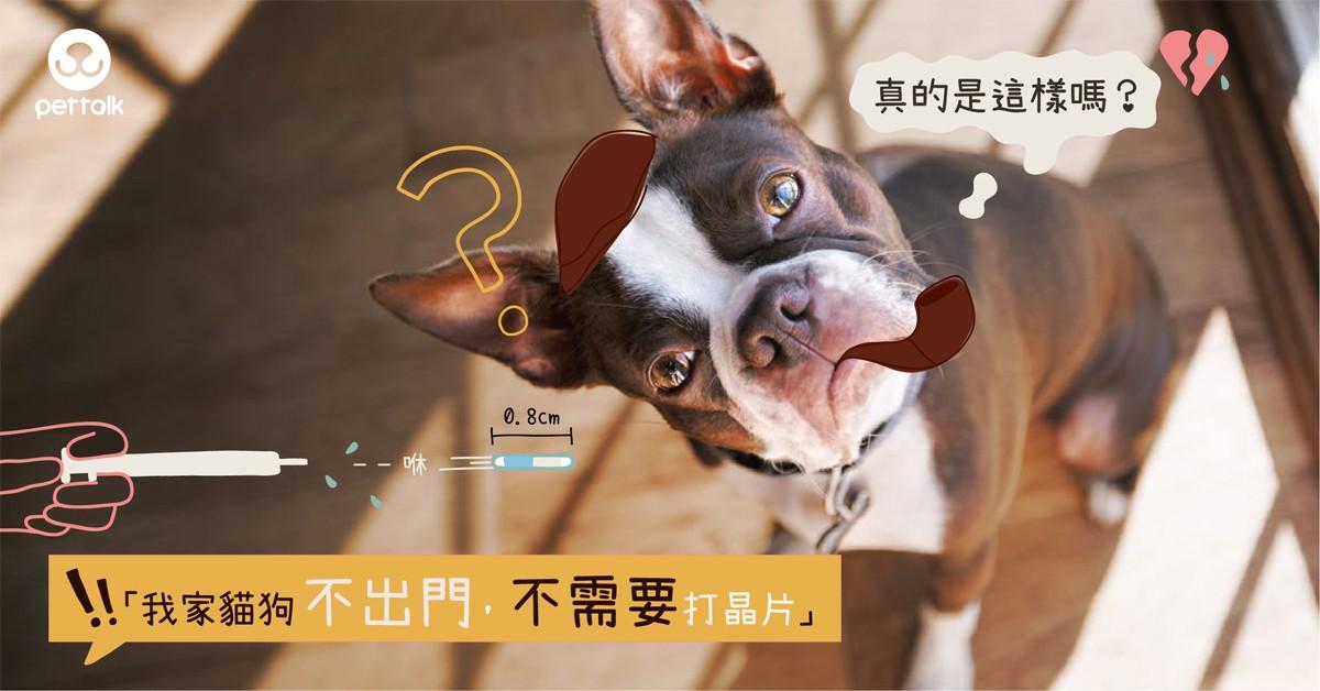 「我家貓狗不出門,不需要打晶片」真的是這樣嗎?|專業獸醫—林銘璋