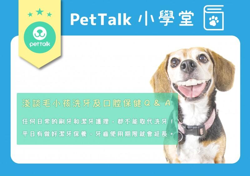 【PetTalk小學堂】淺談毛小孩洗牙及口腔保健