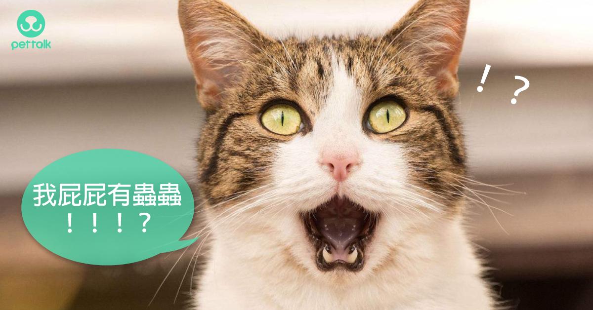 貓屁屁有蟲蟲!如何治療貓絛蟲?|專業獸醫—林源盛