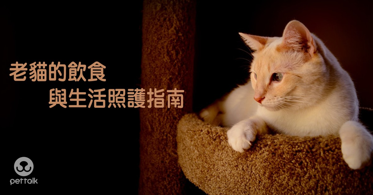 老貓的飲食與生活照護指南|PetTalk愛寵健康談