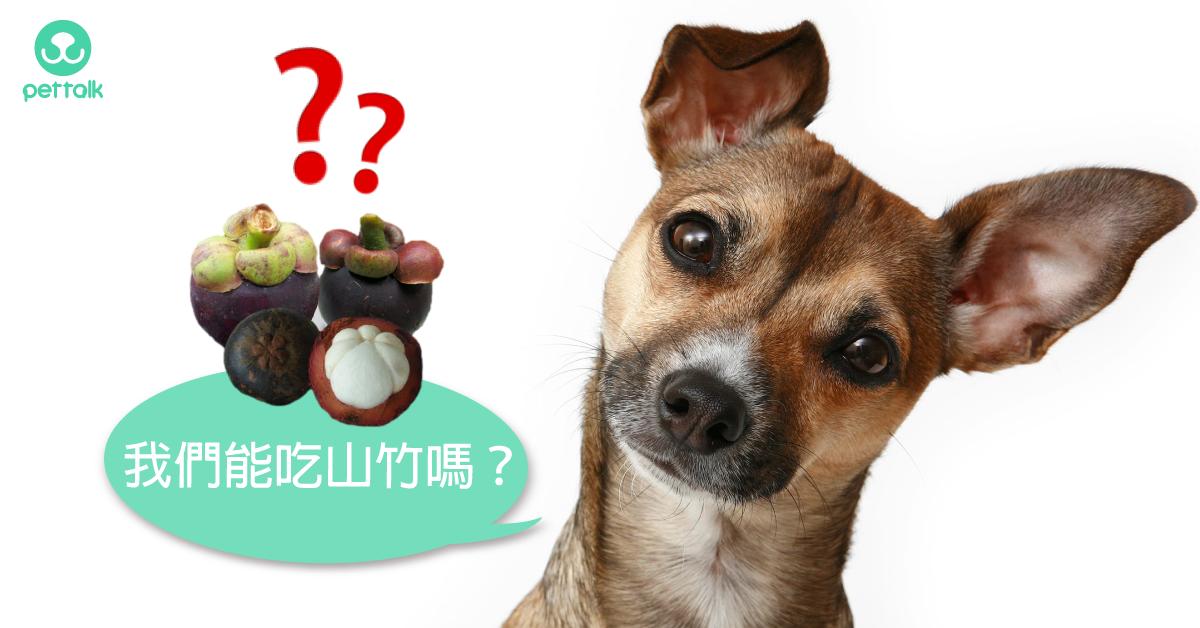 「水果之后」山竹回來了~狗狗能吃山竹嗎?|專業獸醫—吳展祥