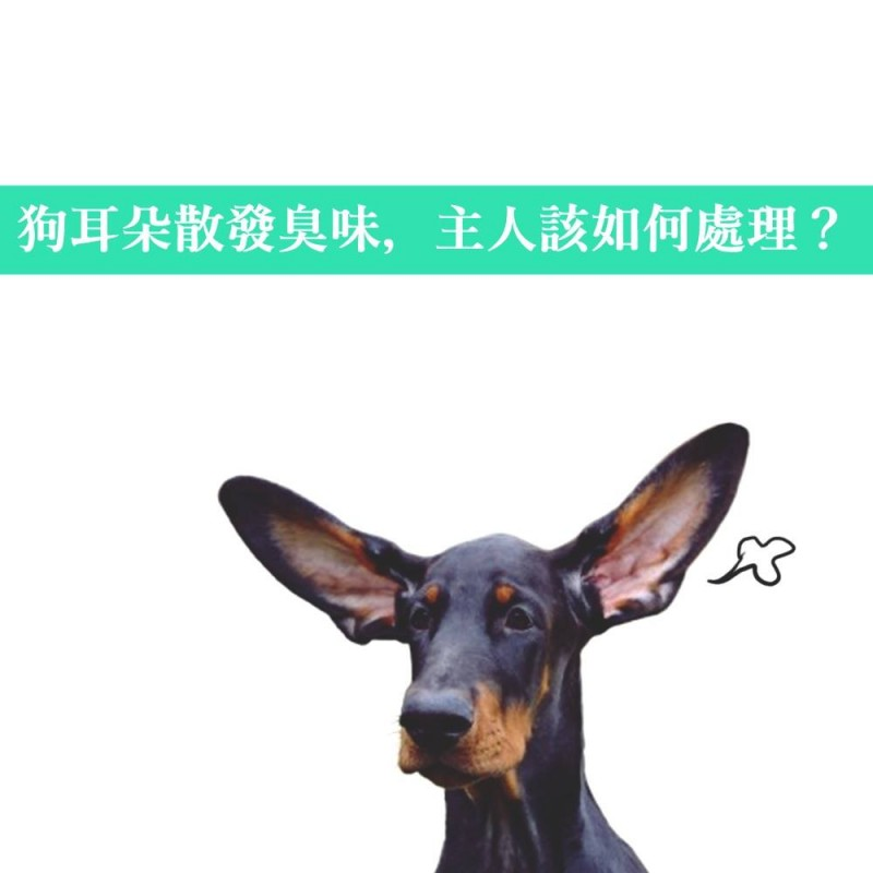 【PETTALK小學堂】狗狗的耳朵清潔