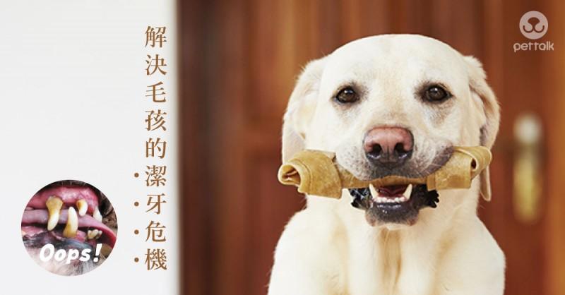 「牛皮骨」讓你跌入潔牙陷阱|PetTalk愛寵鮮食堂