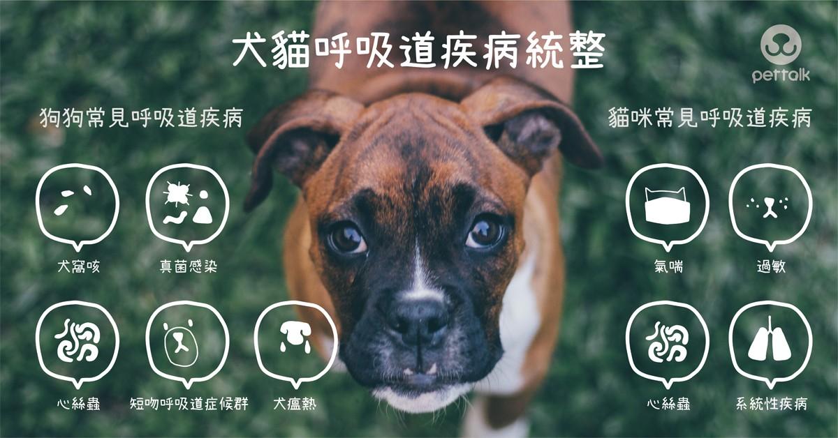 犬貓呼吸道疾病統整|專業獸醫師—陳正傑醫師