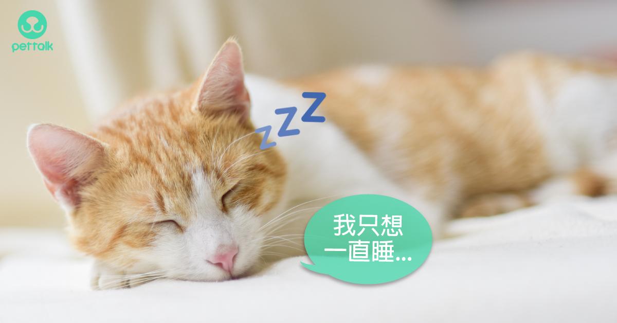 貓咪步入熟齡期,4大疾病需注意|專業獸醫—王善群