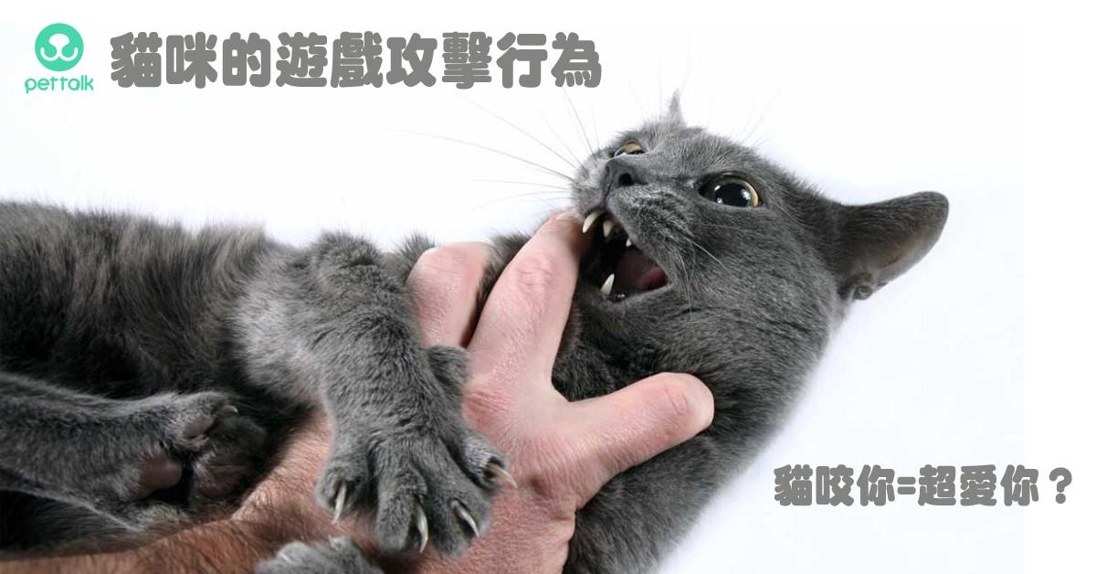 為什麼貓咪會有遊戲攻擊行為?|PetTalk愛寵健康談