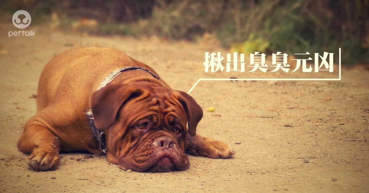 狗有一種狗味,揪出臭臭來源|PetTalk愛寵健康談
