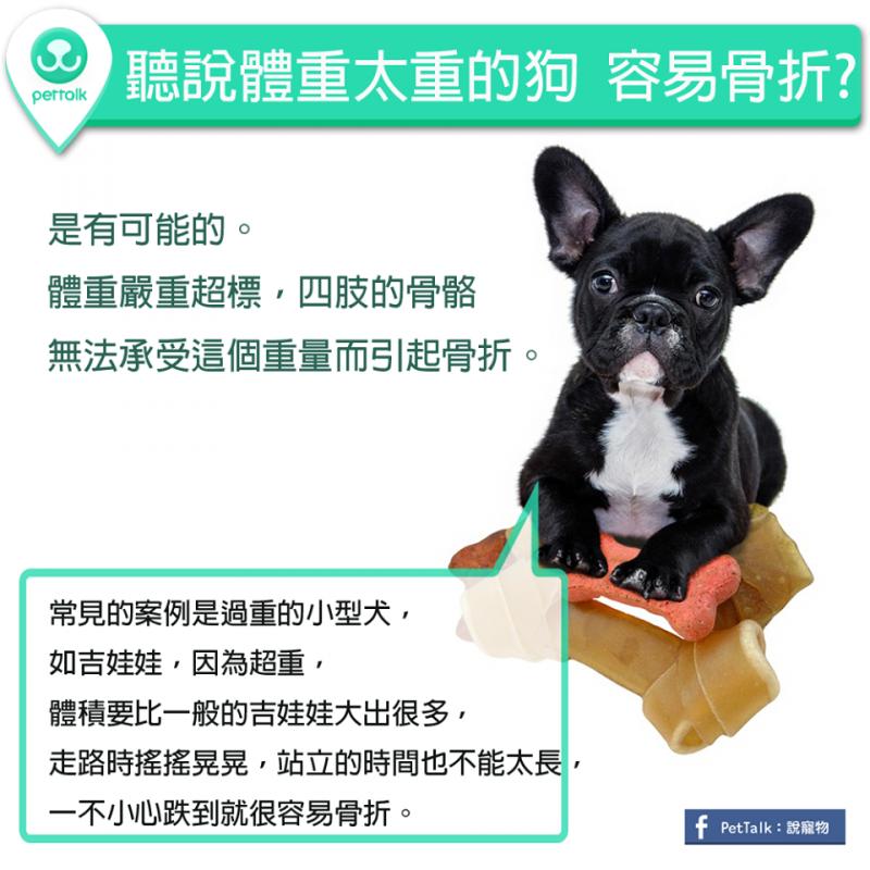 【PETTALK小學堂】聽說體重太重的狗,容易骨折?