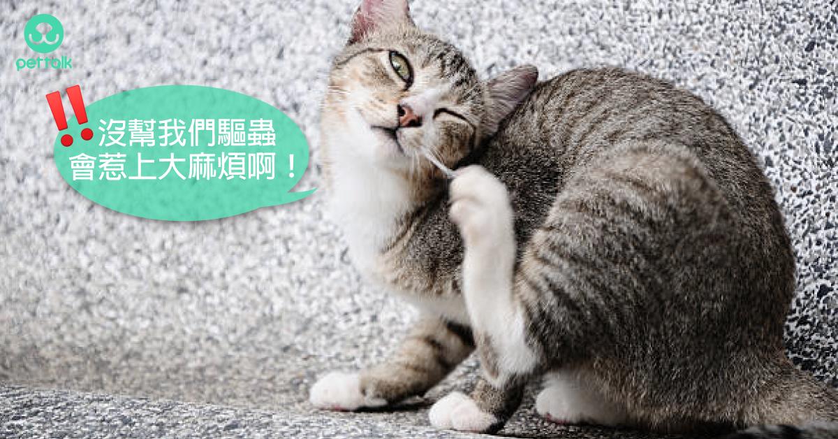 常見貓咪體內寄生蟲大百科|專業獸醫—王善群