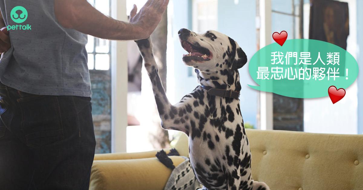 從動物到寵物—古代狗狗VS現代狗狗|寵物美容老師—林文琳
