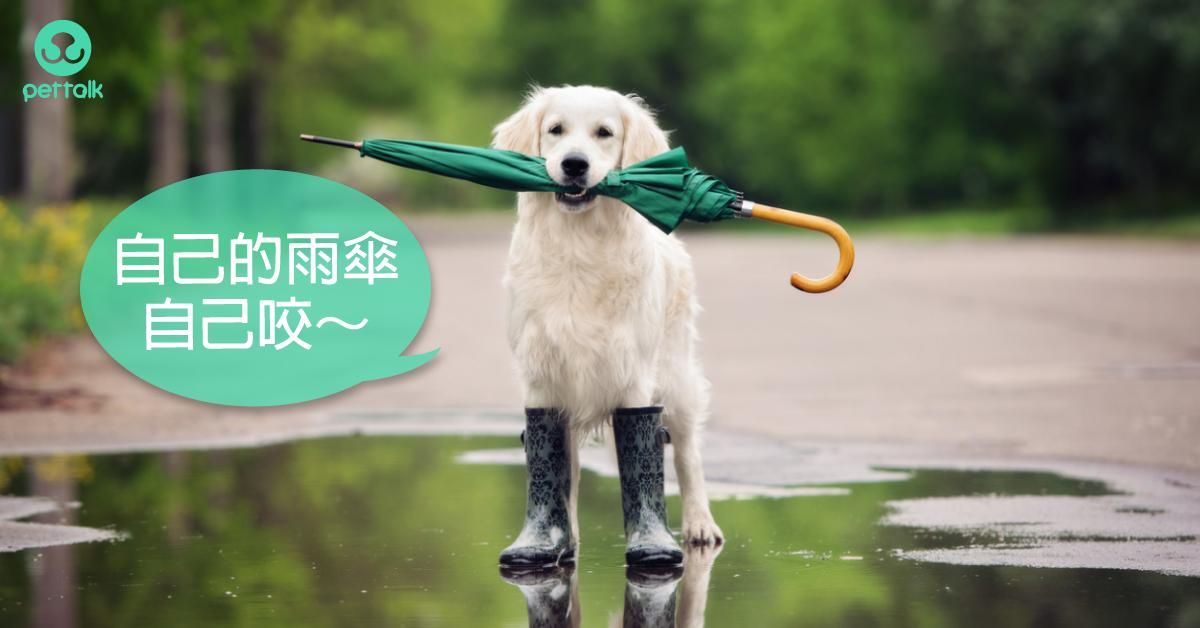 大雨過後,當心感染無形殺手「鉤端螺旋體」|專業獸醫—林源盛