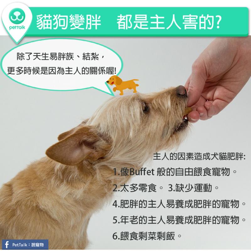 【PETTALK小學堂】貓狗變胖,其實都是主人害的?