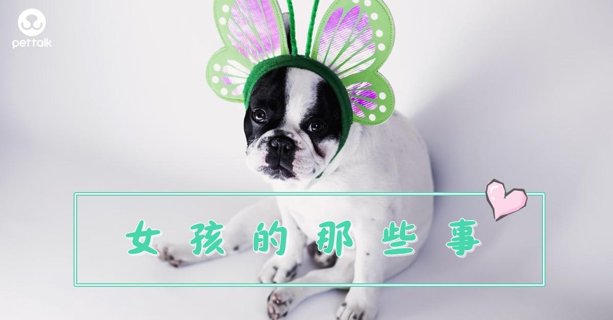 私密處問題:母狗要注意的5件事!|PetTalk愛寵健康談