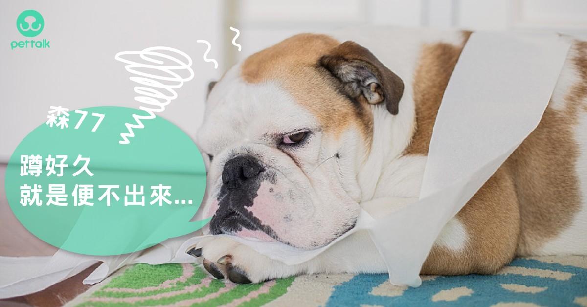 「蹲好久就是便不出來...」狗狗便秘該怎麼辦?|專業獸醫—李侯承