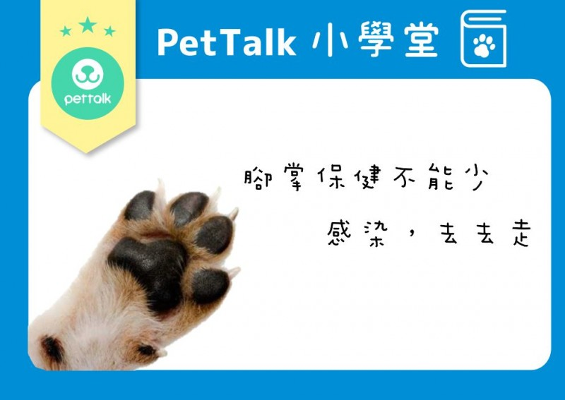 【PETTALK小學堂】狗寶貝很愛舔腳嗎?(趾間炎)