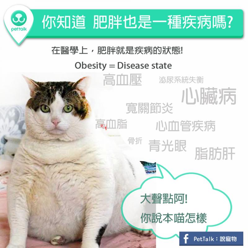 【PETTALK小學堂】你知道肥胖是一種病嗎