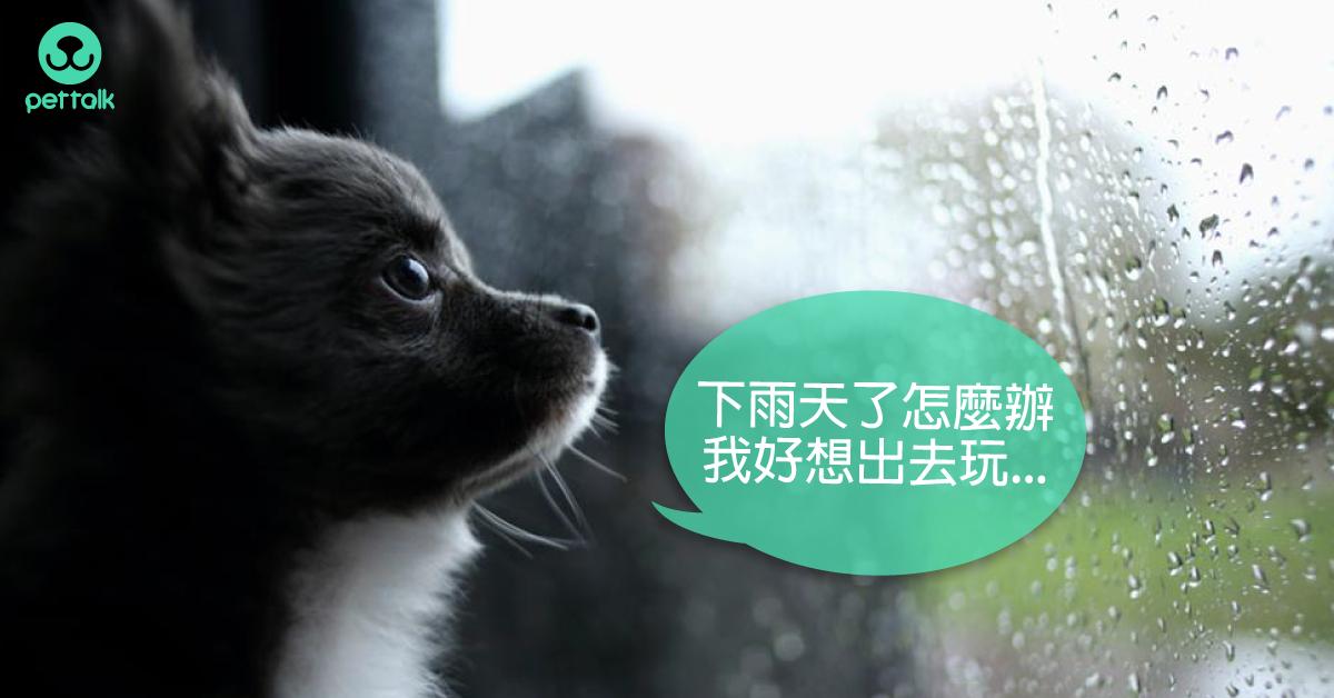 進入「颱風季」,傳染病菌伺機而動|專業獸醫—吳展祥