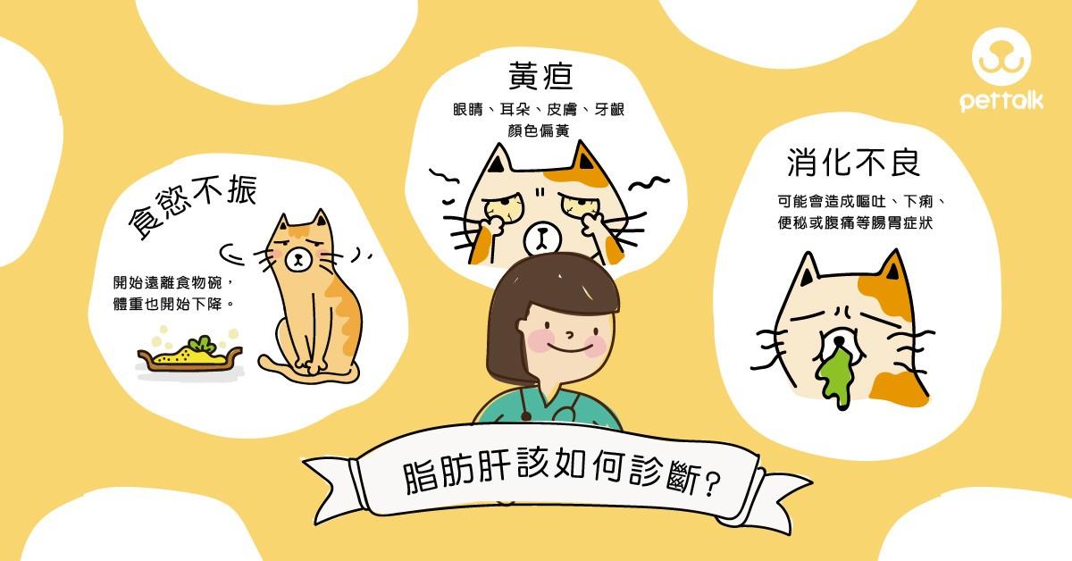 〔肥胖是種病〕貓咪脂肪肝|專業獸醫師—陳郁晴醫師