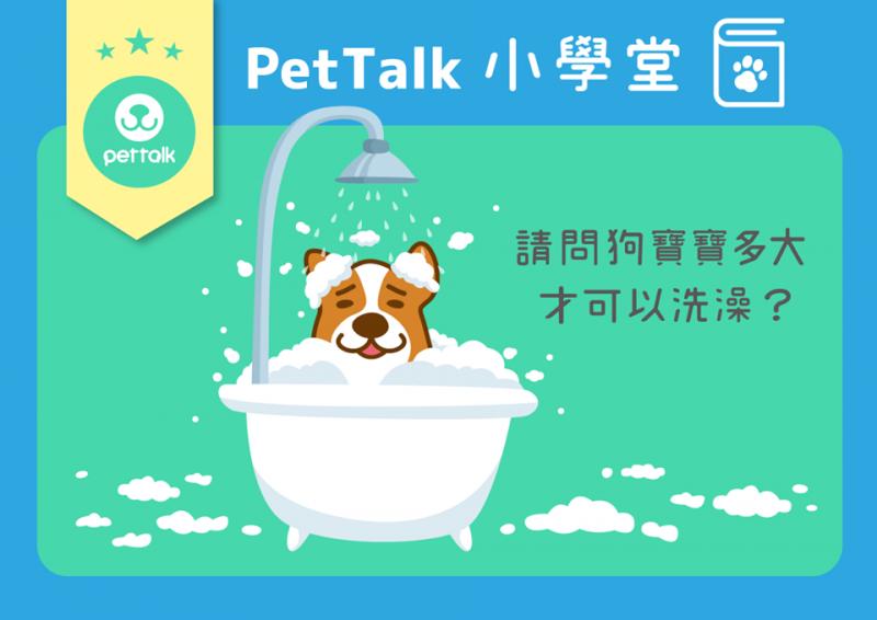 【PetTalk小學堂】狗寶寶多大才可以洗澡?