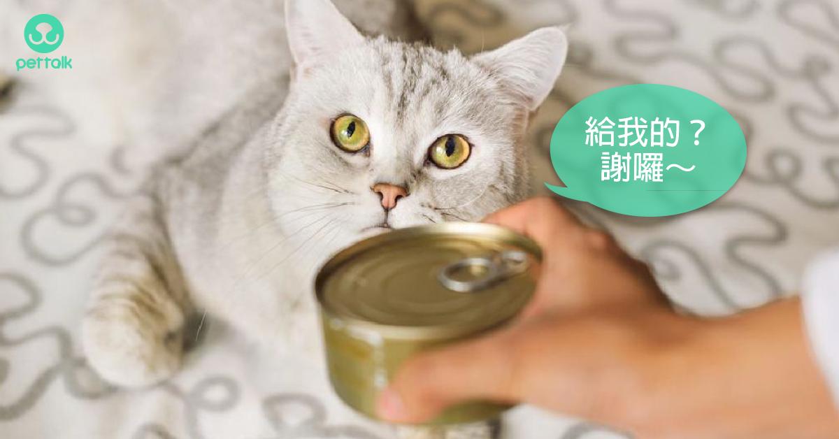 貓咪需要的專屬營養大全|專業獸醫—吳展祥