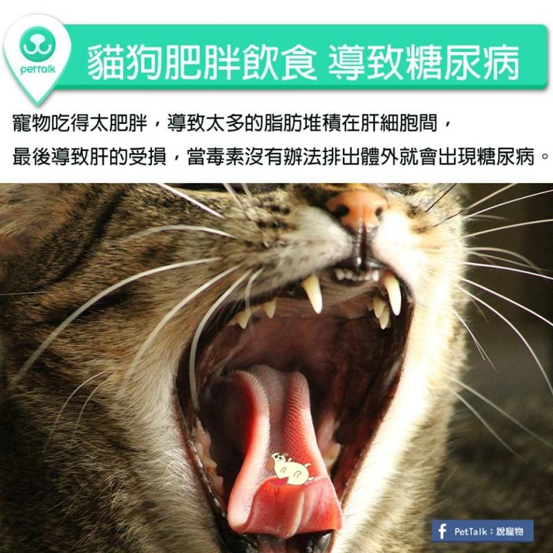 【PETTALK小學堂】貓狗肥胖飲食,導致糖尿病