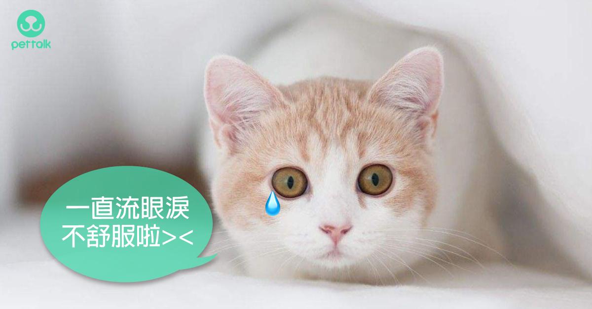 貓奴請注意!當心人畜共通傳染病—貓披衣菌|專業獸醫—林源盛