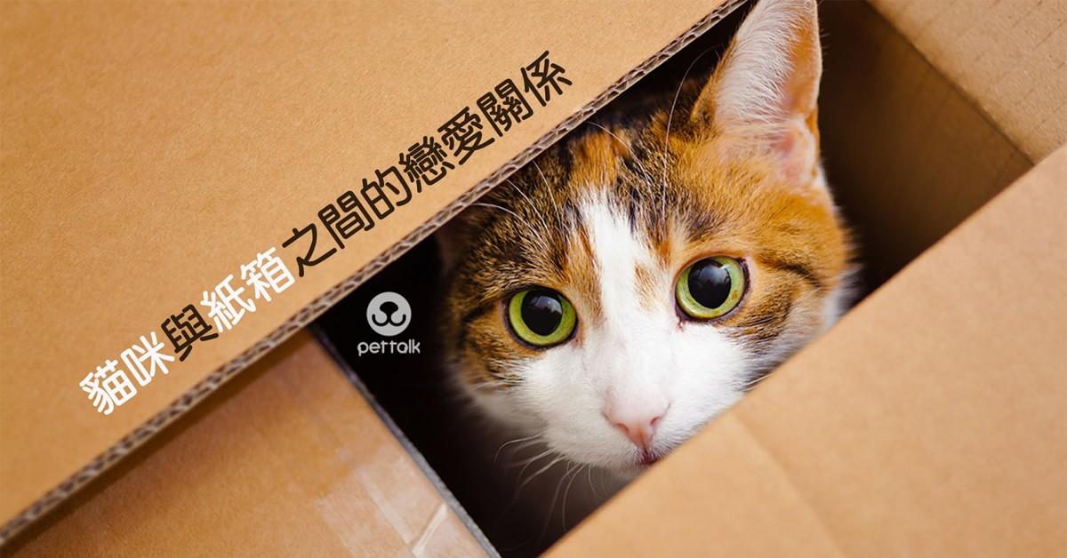 貓咪與紙箱之間的戀愛關係|PetTalk愛寵健康談