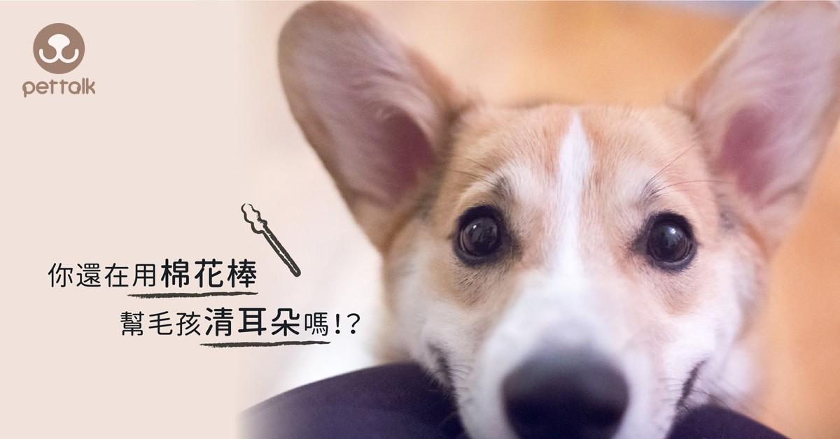 你還在用棉花棒幫毛孩清潔耳朵嗎?|專業獸醫師—陳郁晴醫師