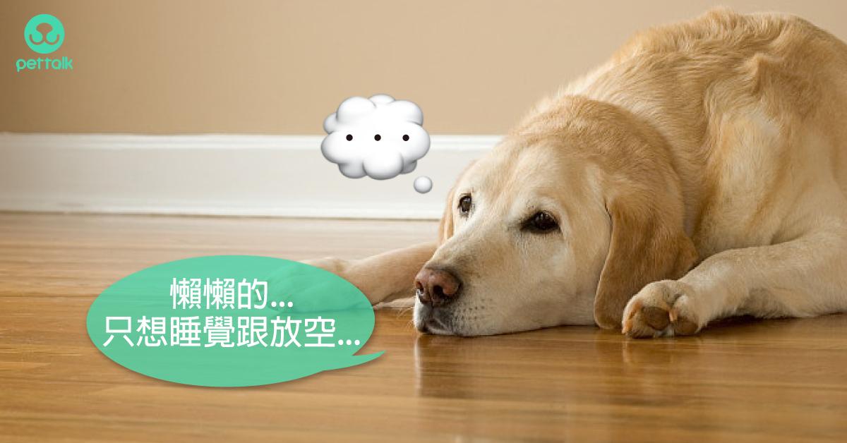 「我的狗好像不認識我了」從跡象發現狗狗患上失智症|專業獸醫—朱道南