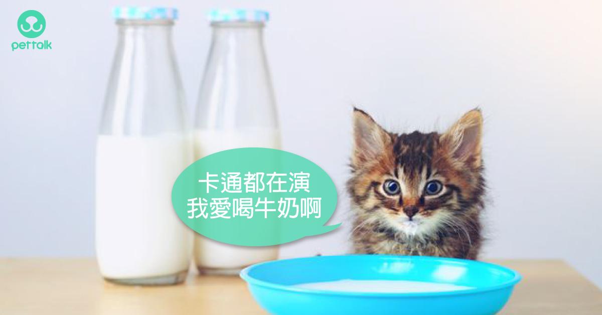 破除迷思系列:貓咪愛吃魚?喝牛奶?|專業獸醫—吳展祥