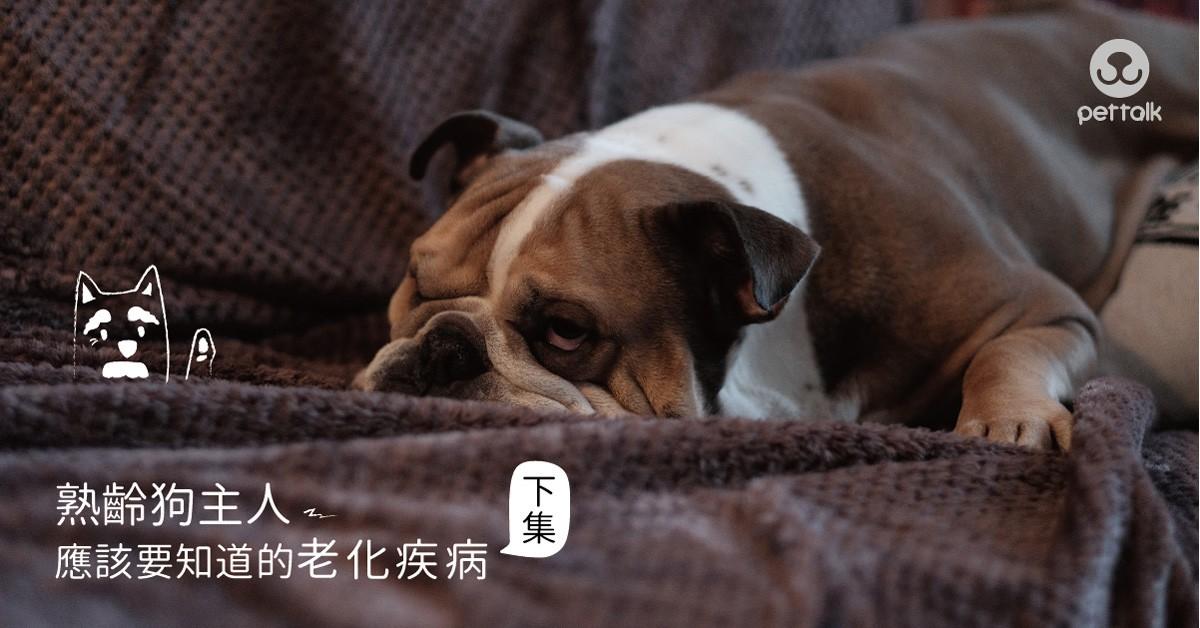 熟齡狗主人應該要知道的老化疾病(下集)|專業獸醫師—許展誠醫師