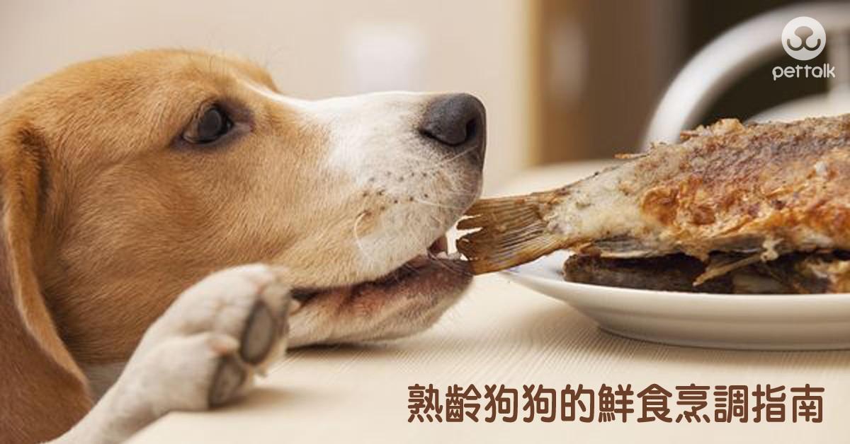 熟齡狗狗的鮮食烹調指南|PetTalk愛寵健康談