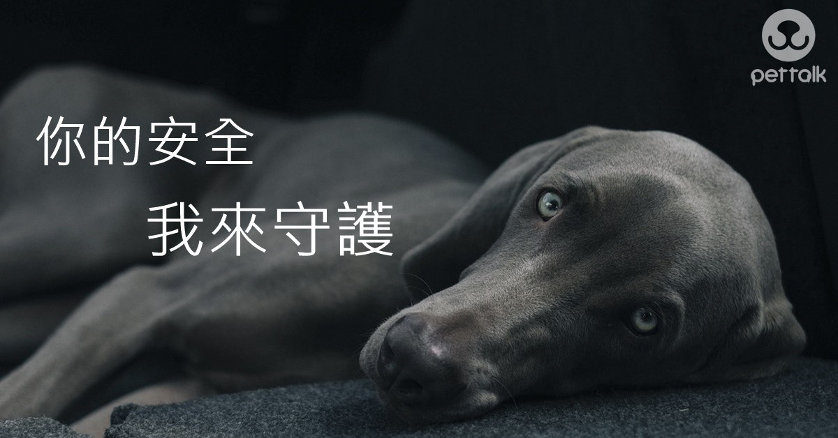 狗狗家長必學的5種急救方法|PetTalk愛寵健康談