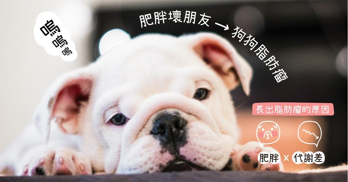 肥胖壞朋友—狗狗脂肪瘤|專業獸醫師—吳展祥醫師