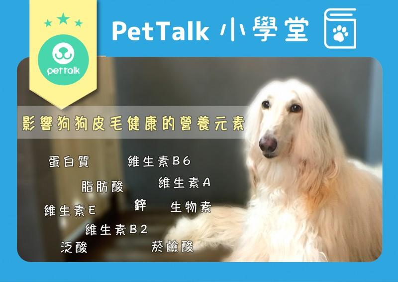 【PetTalk小學堂】影響狗狗皮毛健康的營養元素
