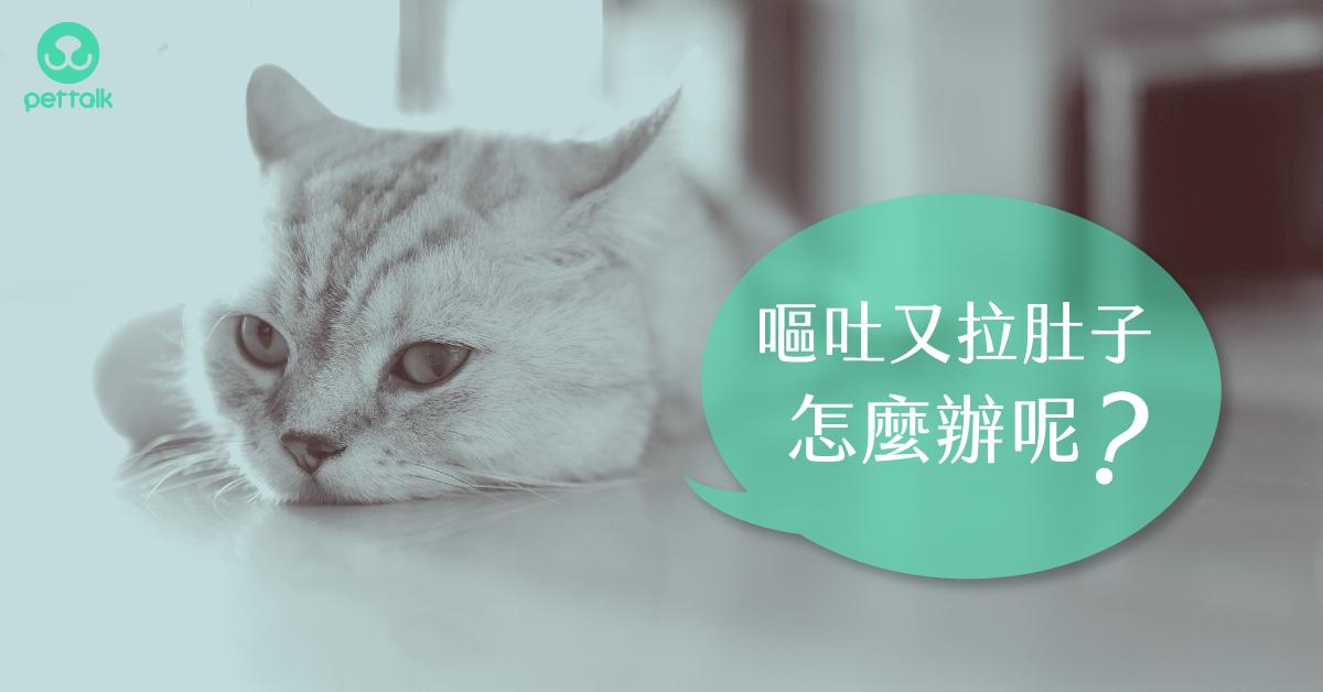 嘔吐又腹瀉!貓咪得腸胃炎該怎麼辦?|專業獸醫—林銘璋
