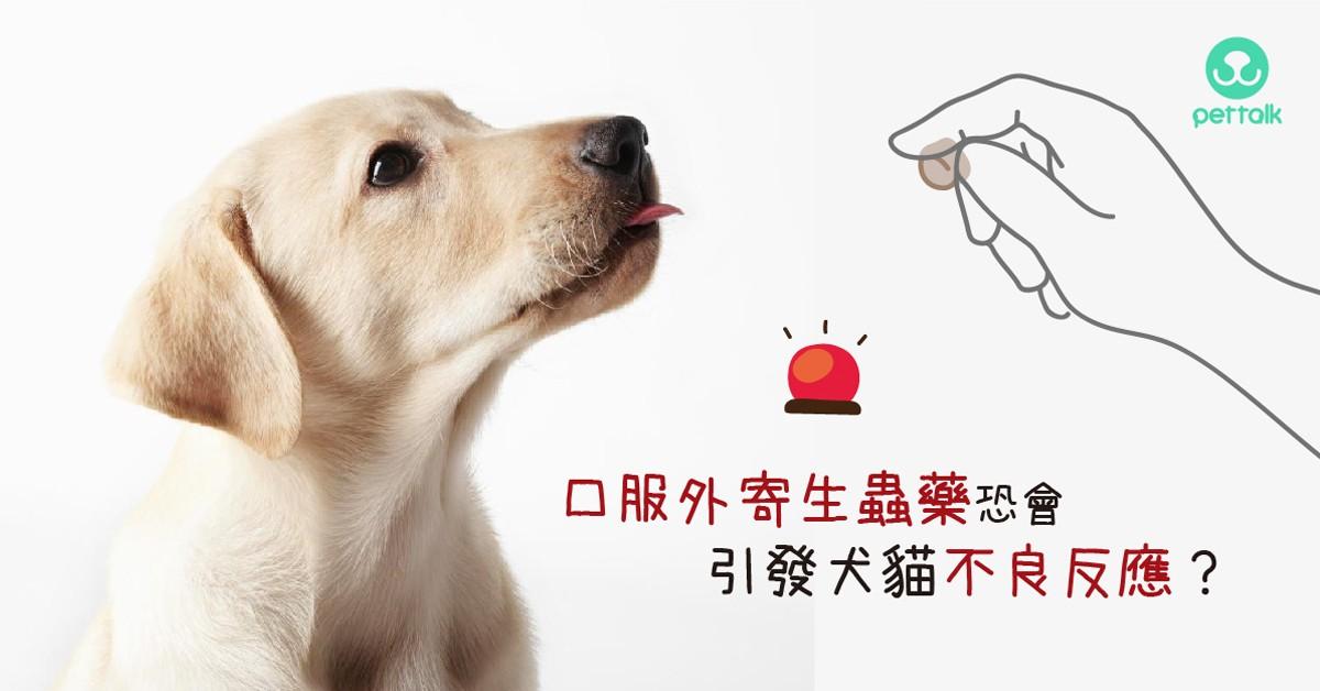 口服外寄生蟲藥恐會引發犬貓不良反應?|專業獸醫師—張振東醫師