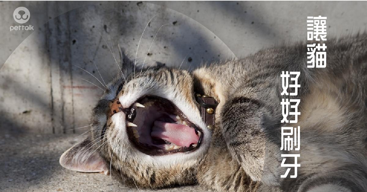 讓貓皇遠離牙齒疾病|PetTalk愛寵健康談